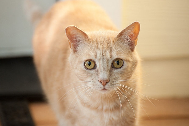 FCCO offers free clinics, resources in honor of National Feral Cat Day