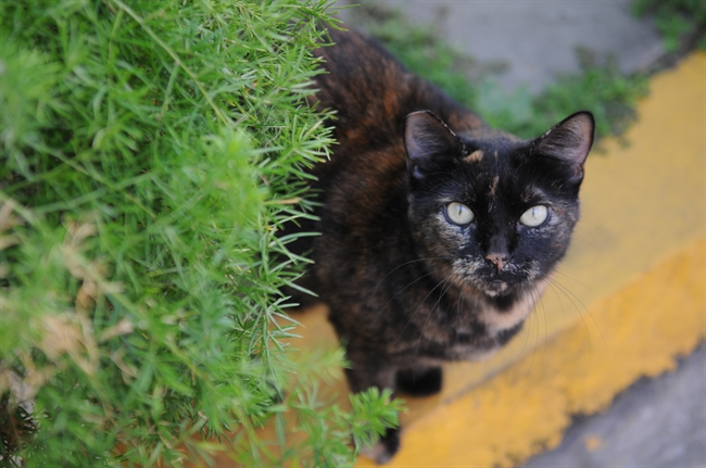 It's National Feral Cat Day, and Here's What You Need to KNow