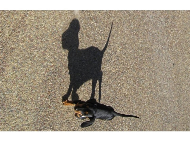 Family Fun: Celebrate 'National Something on a Stick Day' with Wiener Dogs And ...