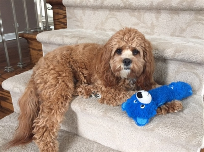 North Shore National Puppy Day Submissions