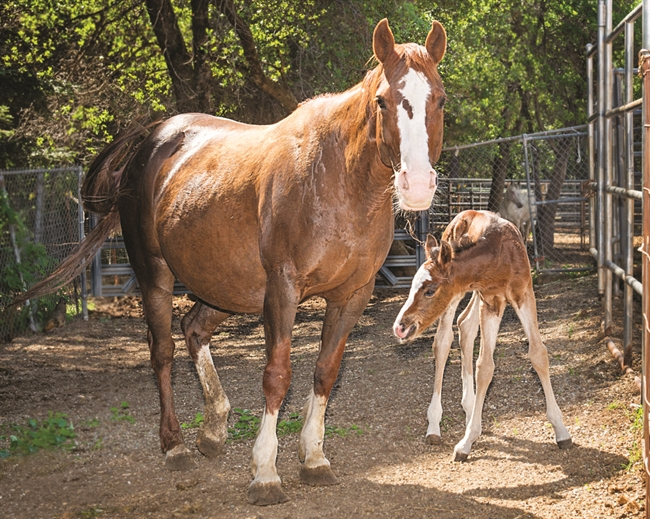 All About Equine wins ASPCA grant