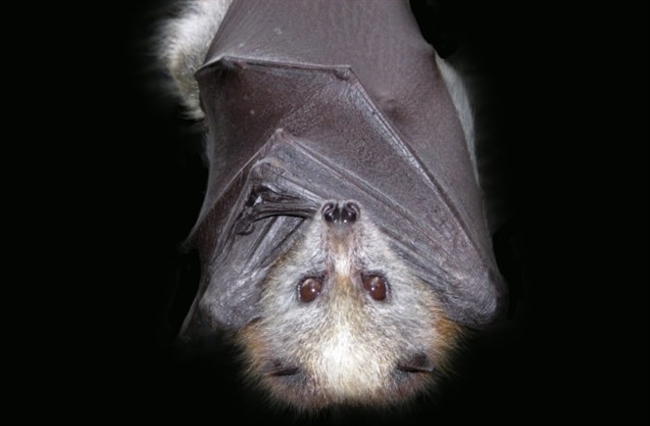 It's National Bat Appreciation Day: Photos