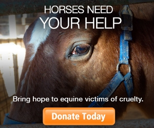 Laughing Pony Rescue participates in 'Help a Horse Day'