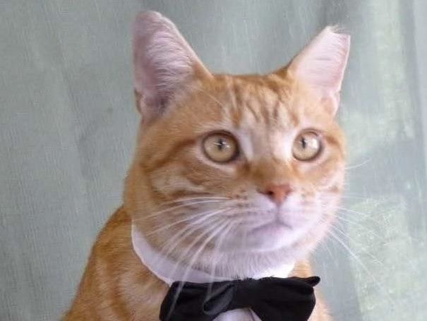 Franklin Co. Humane Society to observe National Feral Cat Day Oct. 16