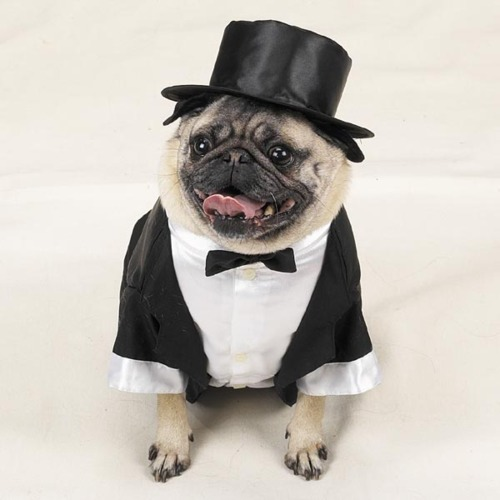 Dress Up Your Pet Day: These pics will inspire you to fancy dress your four ...
