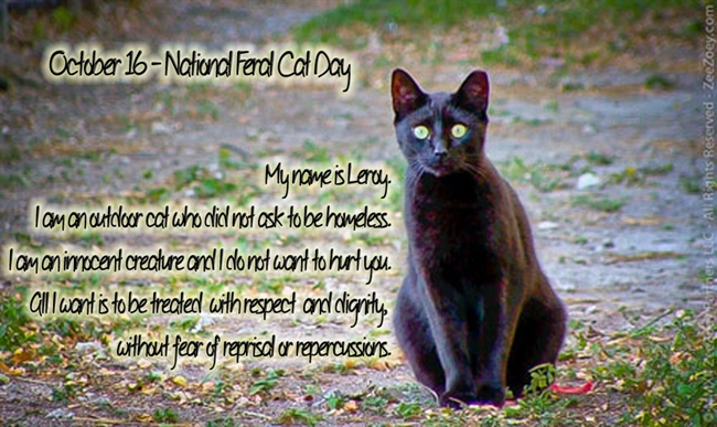Feral Cat Day Observed In Ossining
