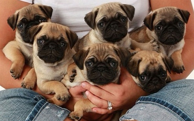 The Daily Cute: It's National Puppy Day!