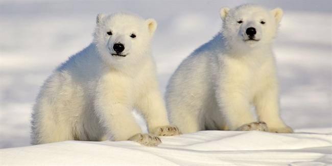 Celebrate International Polar Bear Day With These Stunning Photographs