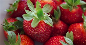 Pick Strawberries Day