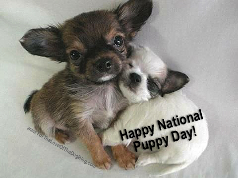 13 National Puppy Day Tweets From Celebrities