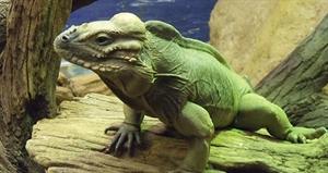Reptile Awareness Day